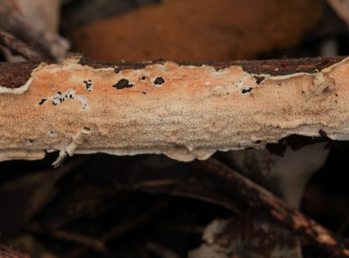 explore, find a fungal group