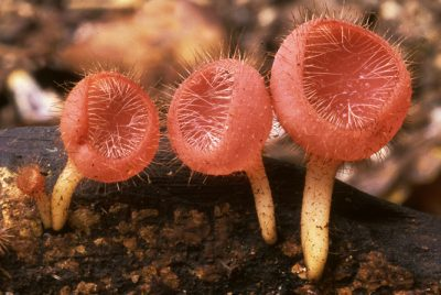 Online Fungimap record released