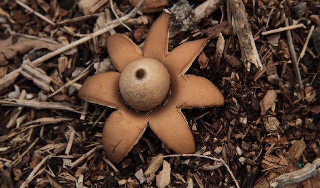 Help with identifying fungi