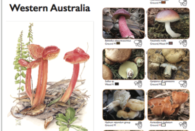 New Pocket Guide for South West WA