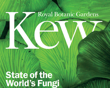 State of the World's Fungi Symposium – report