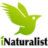Fungimap moving to iNaturalist