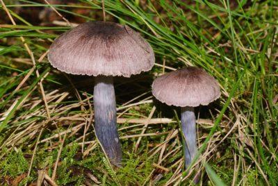 SA Fungimap frogs and fungi booked out