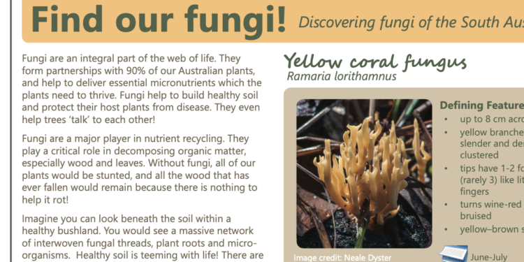 Find our Fungi! SA Murraylands and Riverland region