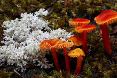 Re:wild and IUCN SSC become first global organisations to call for the recognition of fungi as one of the three kingdoms of life!